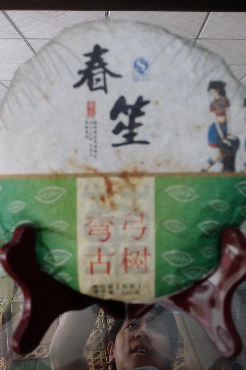 Wangong 弯弓 - 2014 Spring Gushu (200g cake)