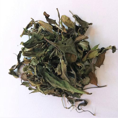 Gaoshan Gushu White Tea 2020 Spring (50g)