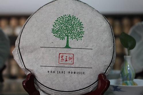 Chawangshu 茶王树 - 2014 Autumn Gushu (200g cake)