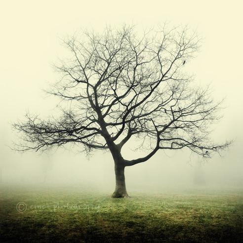 Knighton Park, Leicestershire