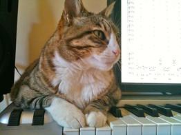 Co-arranger