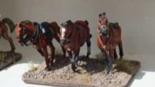 CAV01 Horse Pack Standing