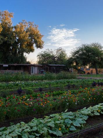 Ферма на Южной горе