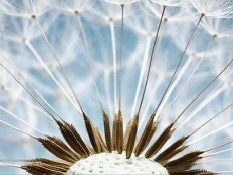 Dica de leitura: Como encontrar a paz em um mundo frenético - Mindfulness