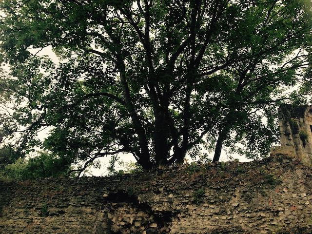 Árboles inmensos