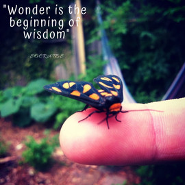 Wonder is the beginning of wisdom_socrat
