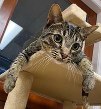 dog boarding, cat boarding