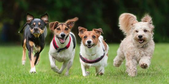 landscape-1466854671-dogs-running.jpeg