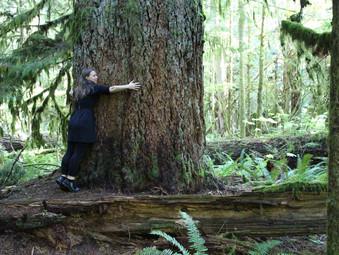 Schätze der Natur genießen - 8 Tipps für den Waldtrip