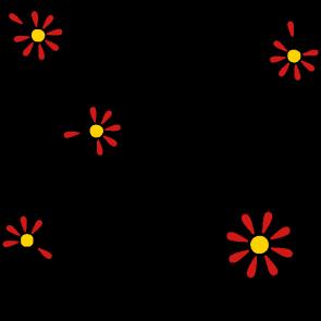 Gänseblümchen, Heilpflanze 2017