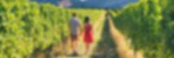 Napa Wine Tour Transportation Ride & Tour Guide San Francisco CA