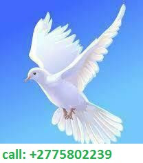 +27795802239 BEST TRADITIONAL HEALER/ SANGOMA in Factoria, Kromdraai, Krugersdorp