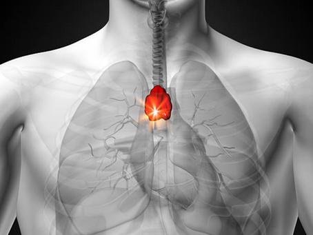 Thymus = immunité