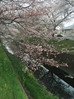 春ですね!It's Spring !!