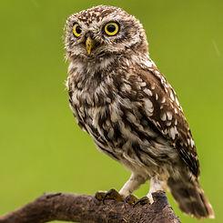 Hawk and Owl Trust.jpg