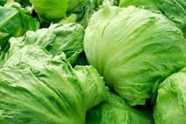 Lettuce (Iceburg)