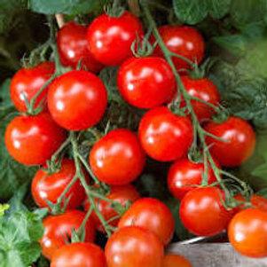 Tomatoes (Cherry, on the Vine)