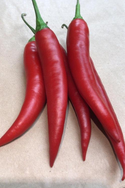 Chilli (Long Dutch Red Chilli)
