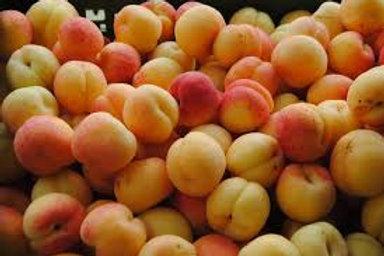 Apricots (Punet)