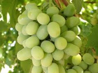 Grapes (White)