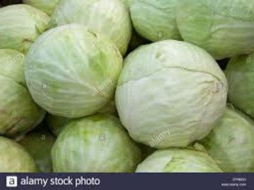 Cabbage (White)