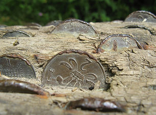 moneytree credit rose davies-flickr.jpg