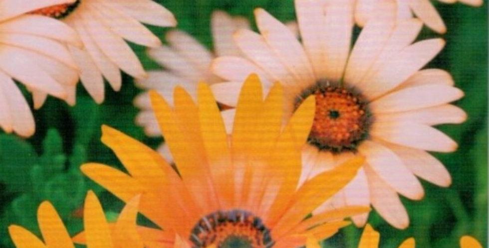 Flower seeds-SA284