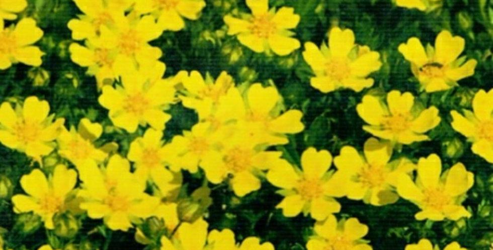 Flower seeds-SA246