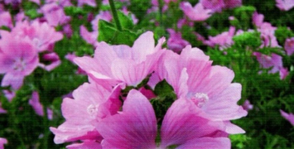 Flower Seeds- SA051