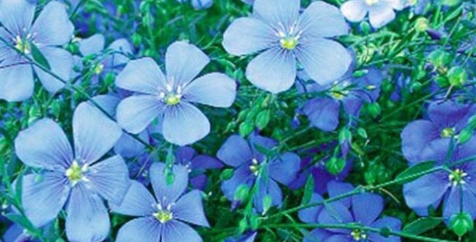Flower seeds-SA083