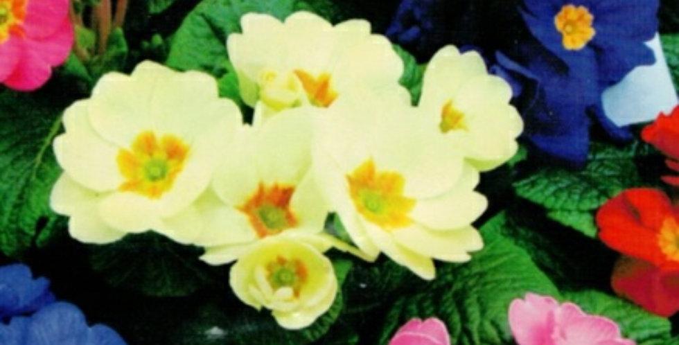 Flower seeds-SA080