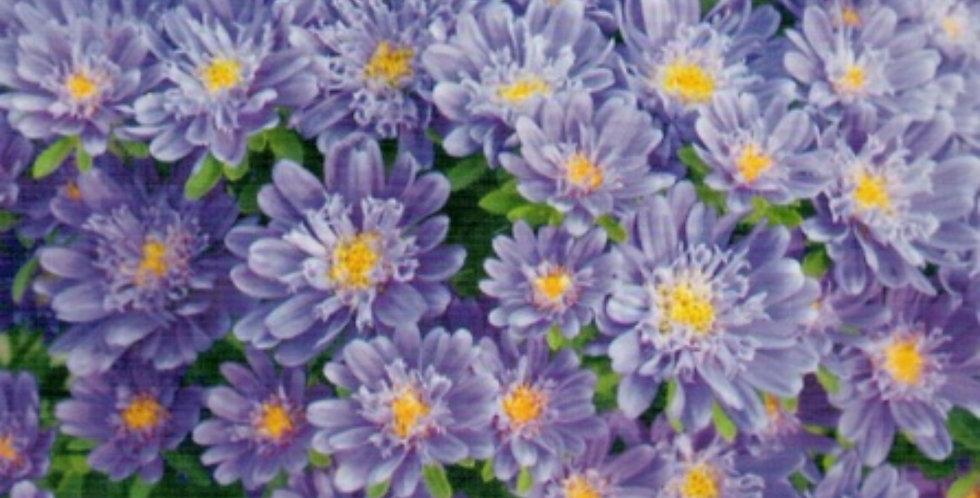 Flower seeds-SA273