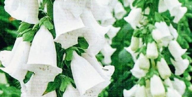 Flower seeds-SA286