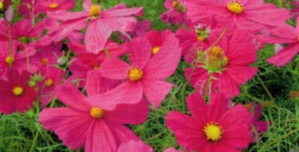 Flower seeds-SA263