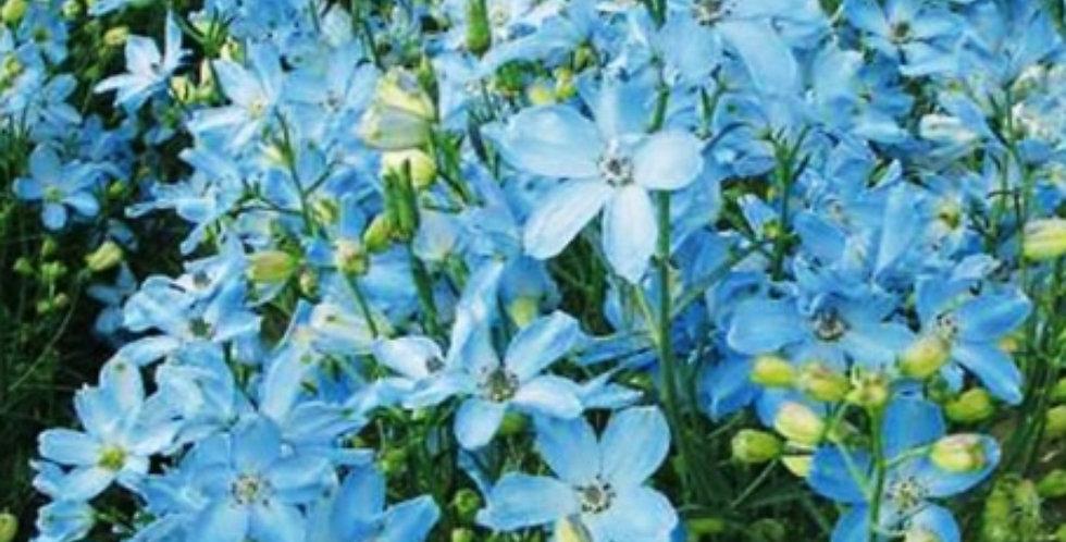 Flower seeds-SA172