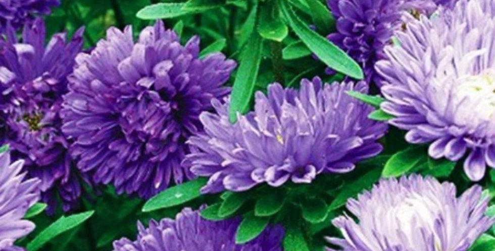 Flower seeds-SA059