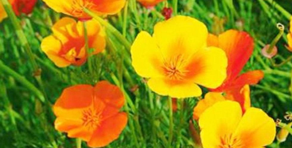 Flower seeds-SA193