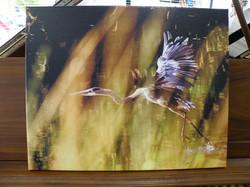 Eastern Washington Heron