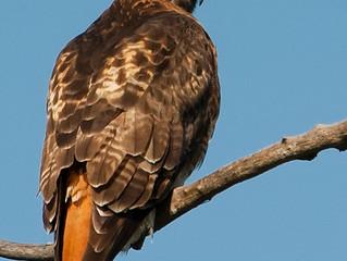 Birds in the Sierra