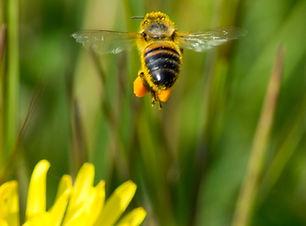 Flora-fauna-quickscan