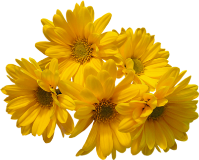 Yellow-Flowers-Bouquet-PNG-Transparent-I