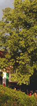hiša, drevo.png