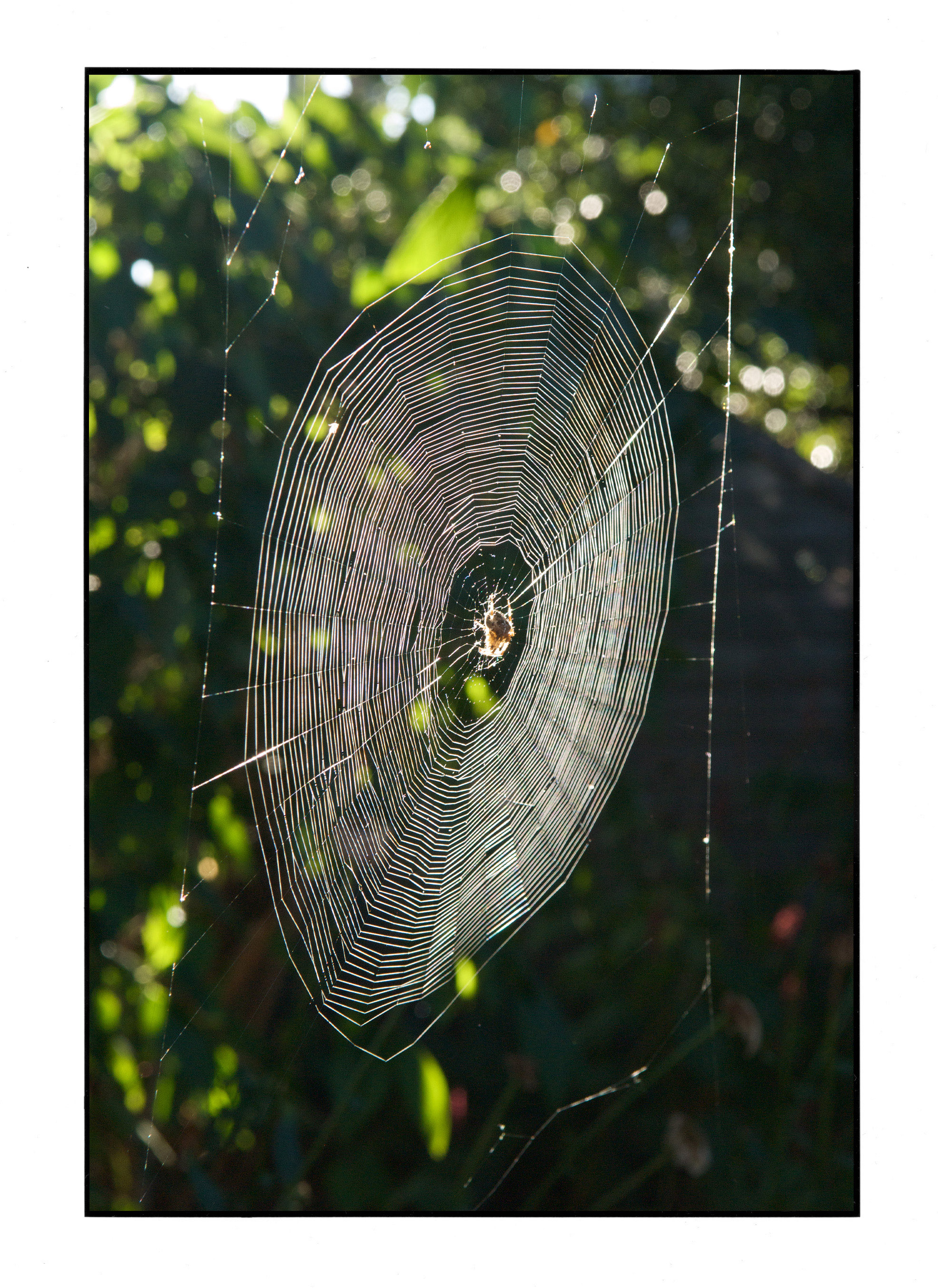 Spider's web.jpg