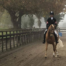 Foggy mornings warming up for dressage t