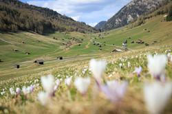 Frühling in der Tschey