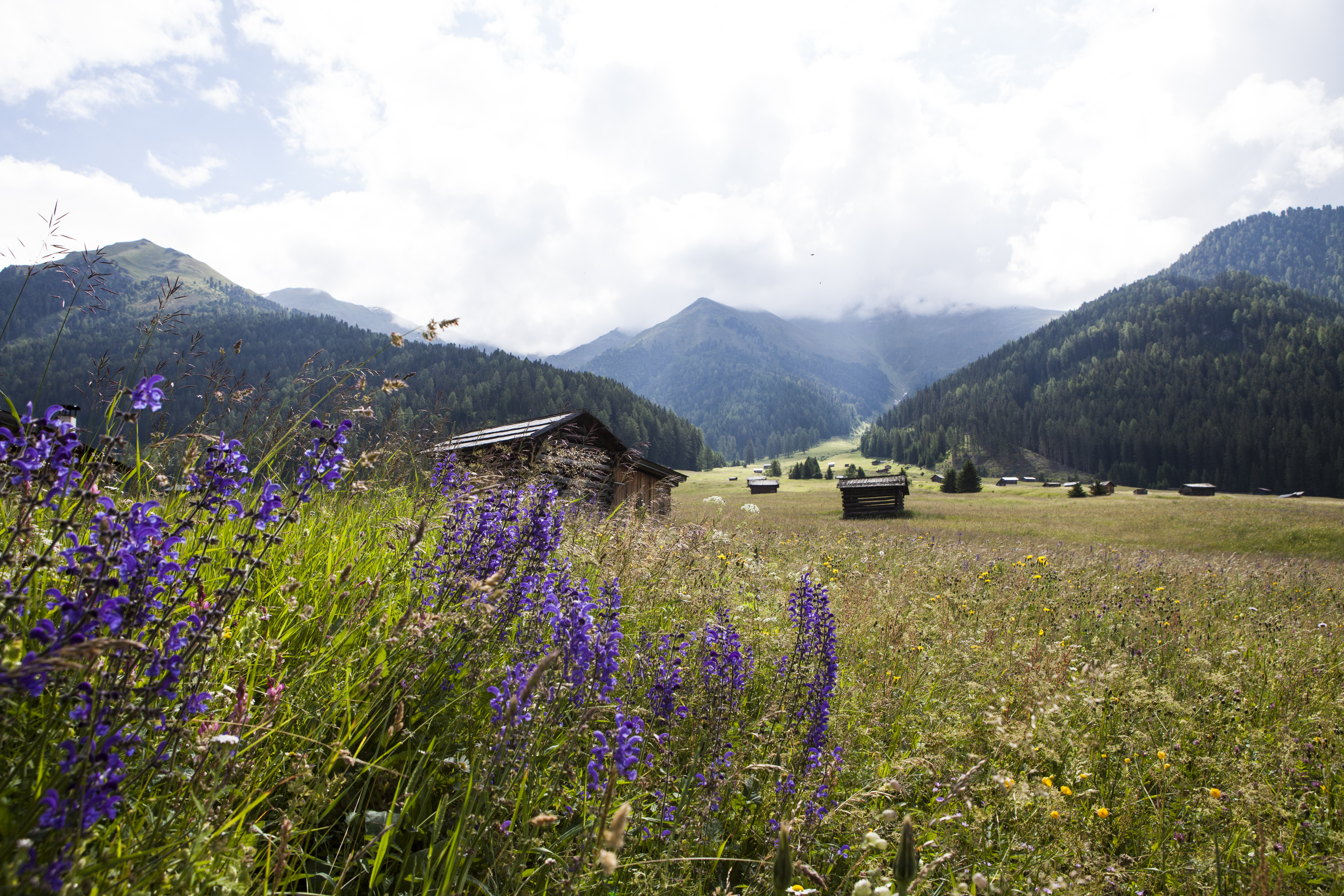 Blühende Wiesen in der Tschey