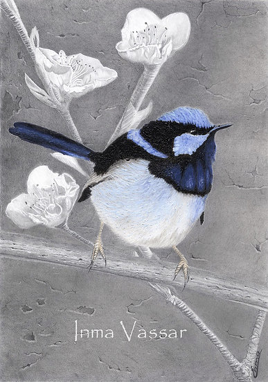 "Art Print (unframed) from Original Gouache Painting ""Little Blue Wren"""