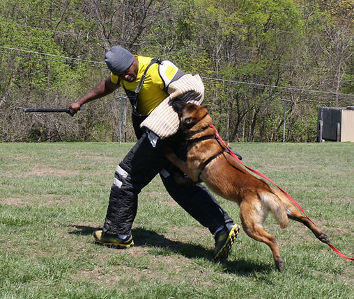 protection dog,marcus hampton, ot vitosha, good of war, mohawk malinois,further moor, mecbergers,conan von clan der Wolfe, malinois,malinois puppies,purebred blegian malinois puppies,purebred malinois puppies,dvg,akc,usca,awdf,schutzhund usa,police k9,knvp,healthy belgian malinois puppies,belgian shepherd dogs,fmbb,dmc,family protection dog,agility,search and rescue,knvp,import dogs