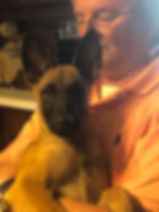 IMG_0316.jpgprotection dog,knut fuchs, peter scherk, florian knabl, dogsports4u, marcus hampton, ot vitosha, good of war, mohawk malinois,further moor, mecbergers,conan von clan der Wolfe, malinois,malinois puppies,purebred blegian malinois puppies,purebred malinois puppies,dvg,akc,usca,awdf,schutzhund usa,police k9,knvp,healthy belgian malinois puppies,belgian shepherd dogs,fmbb,dmc,family protection dog,agility,search and rescue,knvp,import dogs