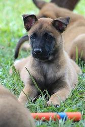 puppies (98).JPG